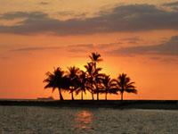 Viva Hawaii